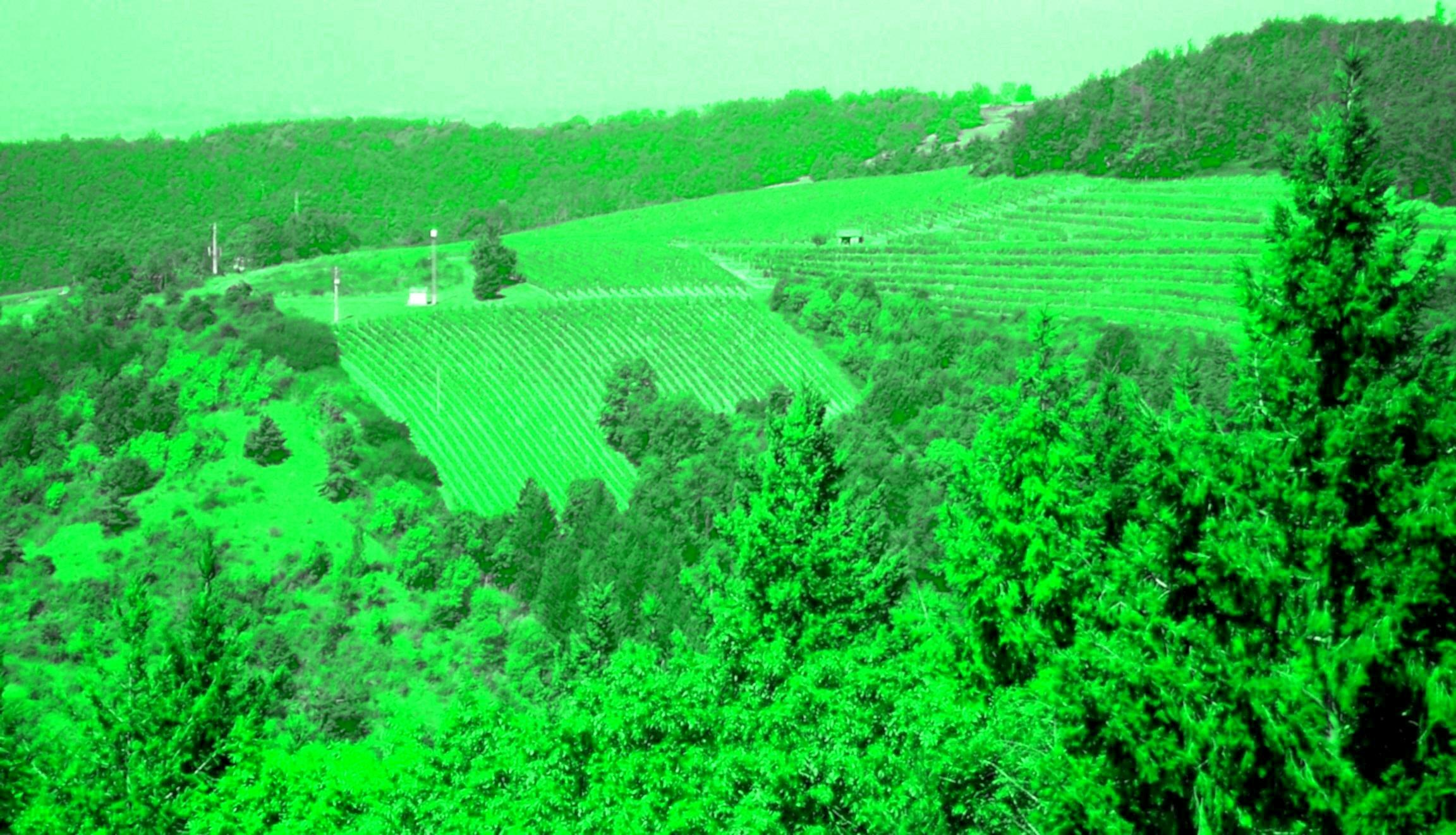 vignoble-de-la-vallee-de-la-loire.jpg